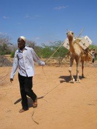 camel-books.jpg